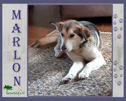 MARLON - Husky Mix - ein ruhiger