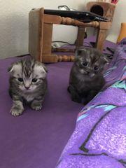 mit Liebe aufgezogene Kätzchen