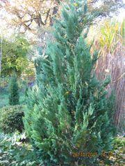 Pflanzen u Bäume günstig v privat