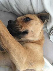 Hund sucht ein Zuhause