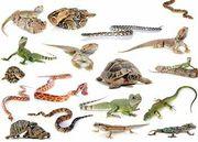 Reptilien Freunde