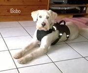 Bobo verliert aufgrund Krankheit sein