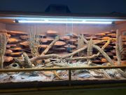Terrarium 200x80x80 Reptilien Leopardgecko Echse