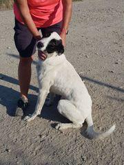 SOS für Windhund Leopold