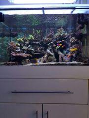 Meerwasser Korallen und Lebendgestein