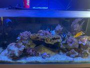Meerwasser Aquarium Fluval