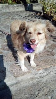 Minihund Mina