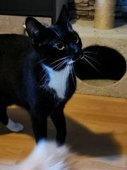 EKH Katze 2 Jahre