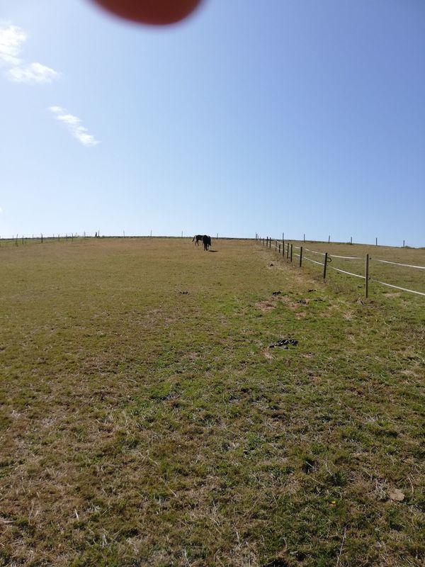 Sommerweide für Stute mit Fohlen
