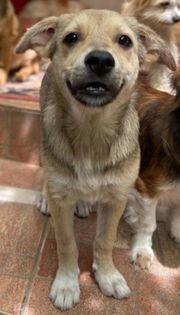 ZUMBA - absolut liebenswertes Hundekind - sucht