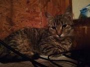 Kätzchen Leni hat ihren Koffer