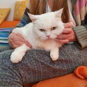 hübsche Katzen Sylvester Lucy und