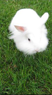 Sie geben Kaninchen zur Adoption