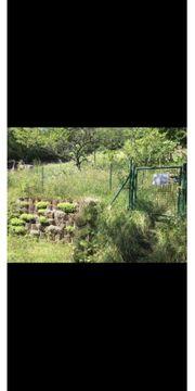 Garten in Keltern Dietlingen Pohle