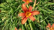 Gartenfreunde suchen Haus oder Eigentumswohnung