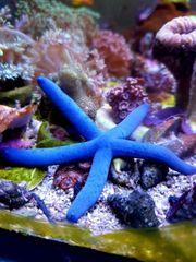 Meerwasser Fische und Niedere Tiere