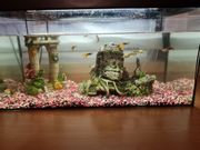 Aquarium mit Fische