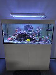 Weissglas Meerwasser Aquarium 400l mit