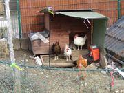 Hühner Stall für 4 bis