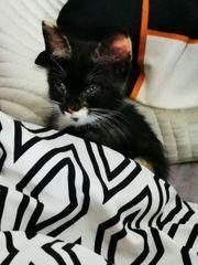 Katzen baby Chanel