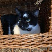 Katze Nuamy sucht ein schönes