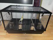 2 Nymphensittiche Käfig
