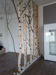 Käferfreies schönes weißes trockenes Birken