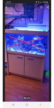 Meerwasser Aquarium 250 Liter