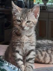 Kitten Babykatzen Kätzchen