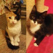 Kätzchen Peaches und Peterle sind