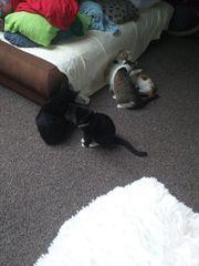 katzen abzugeben in liebe volle