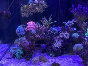 Top Meerwasseraquarium