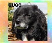 GUGO ein lieber und braver