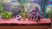Aquarium 180 Liter