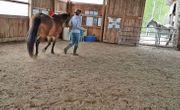Zuverlässige Reiterin sucht Reitbeteiligung Pflegebeteiligung