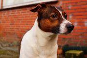 Krebsvorsorge mit Krebsspürhunden - Helfer bei