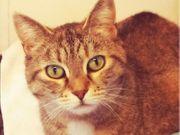 liebe Katzen Lillith und Giselle