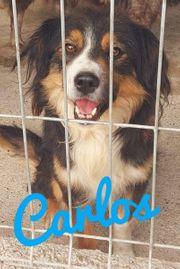 Carlos lieb verspielt