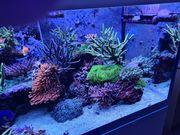 Komplettes Meerwasseraquarium Aqua Medic 575