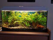Tolles Aquarium 54 l 60x30x30