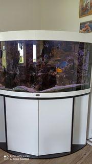 Aquarium inklusive Buntbarsche