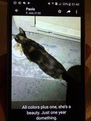 Katze Beauty sucht ein liebevolles