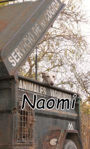Helfen Sie Naomi über das