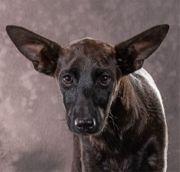 Mali ein zuckersüßes Hundekind