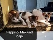 Peppino und seine Geschwister suchen