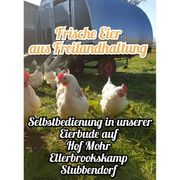 Frische Hühnereier aus Freilandhaltung