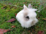 Kaninchen Damen suchen dich