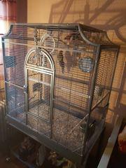 4 Wochen alter Montana Käfig