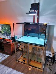 Meerwasser Aquarium ohne Tiere