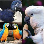 SUCHE Papageien die ein Zuhause
